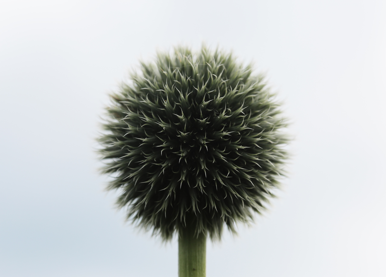 public-domain-images-free-stock-photos-flower-ball