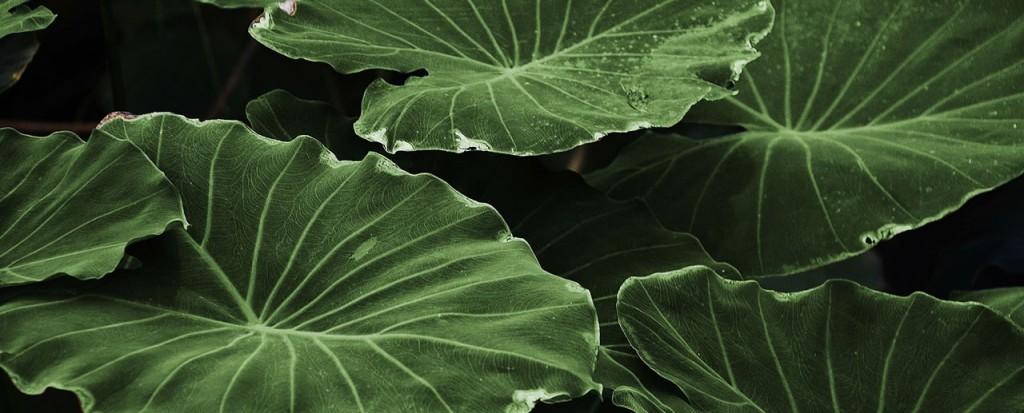 header-leaf.jpg